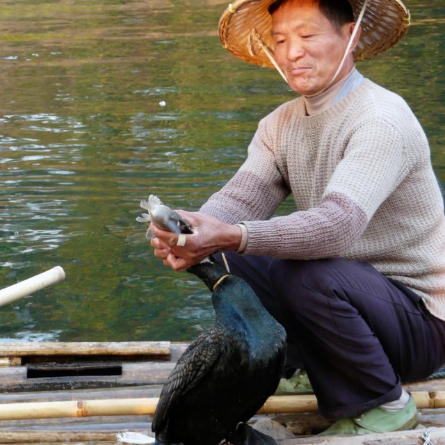 """Cormorant fisherman"" stock image"