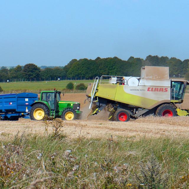"""Summer Harvest"" stock image"