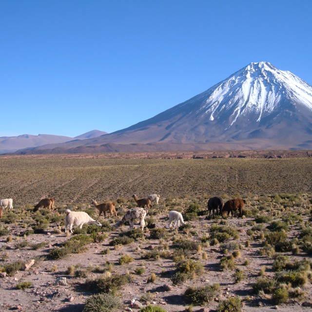 """""""Altiplano"""" stock image"""