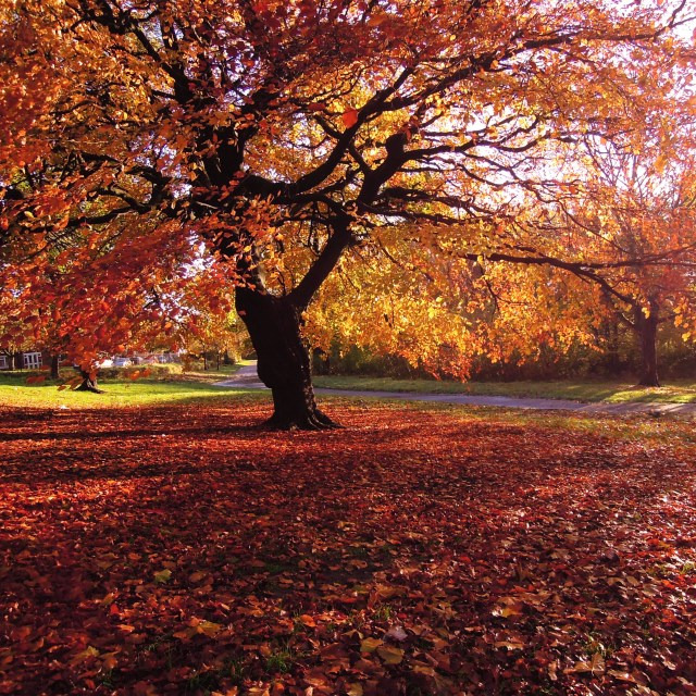 """""""Colours of Autumn."""" stock image"""