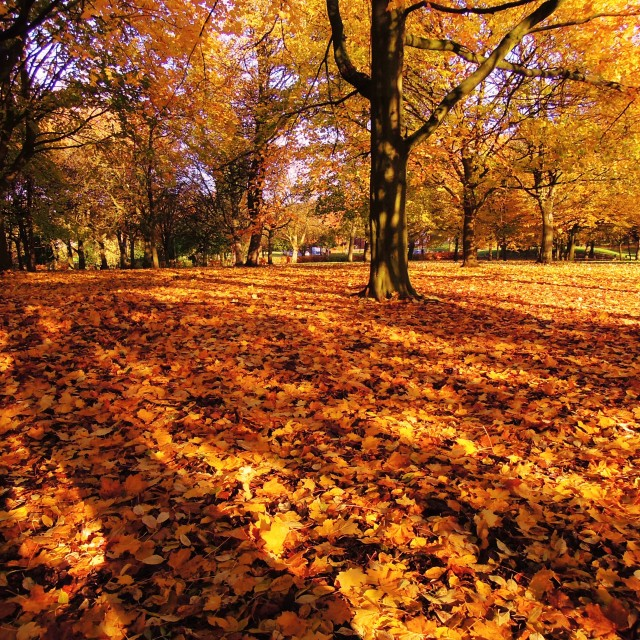 """Autumn colours."" stock image"