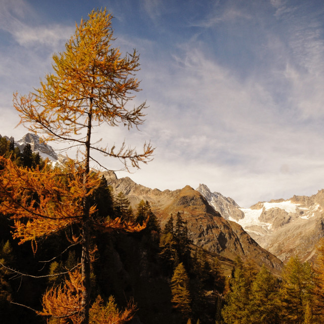"""Autumn colour"" stock image"