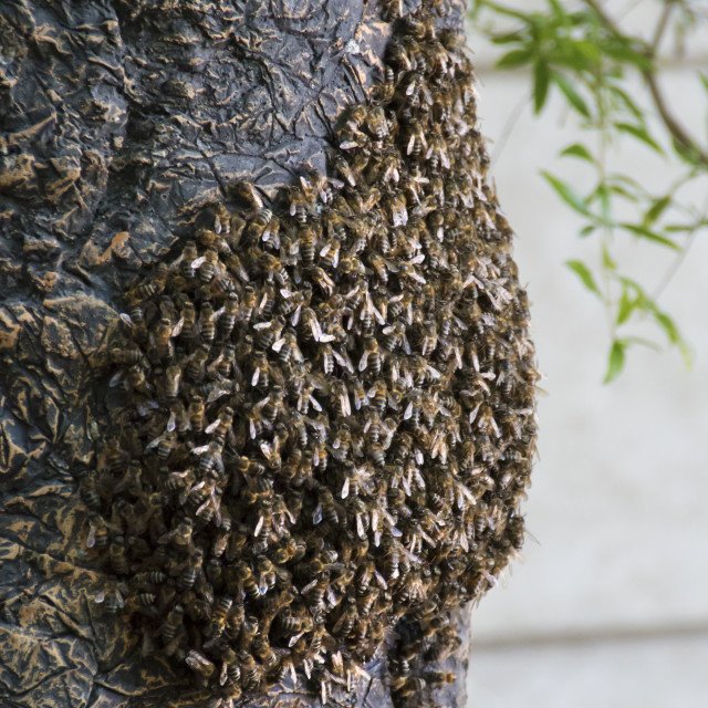 """Swarm of Bees"" stock image"