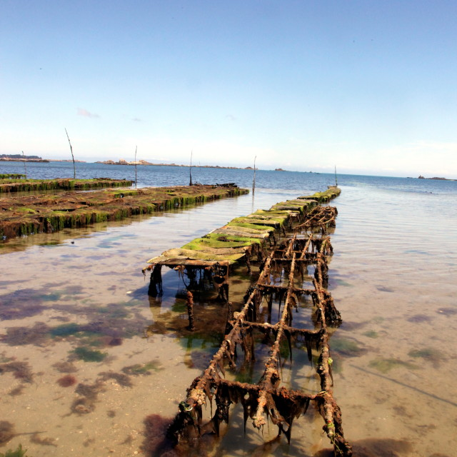 """Oyster farm in Brittany"" stock image"