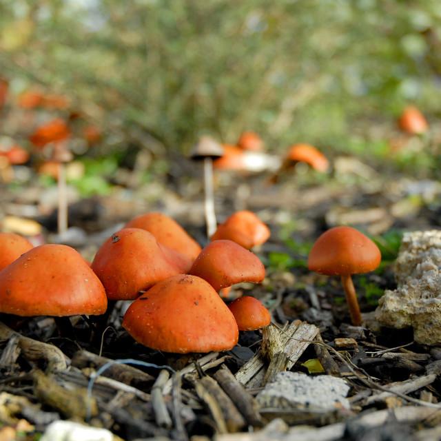 """Among the Mushrooms"" stock image"