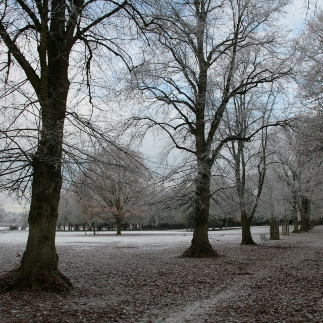 """""""Park in early winter, hard frost"""" stock image"""