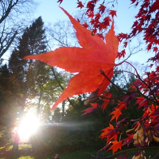 """""""Autumn colour, Batsford Arboretum"""" stock image"""