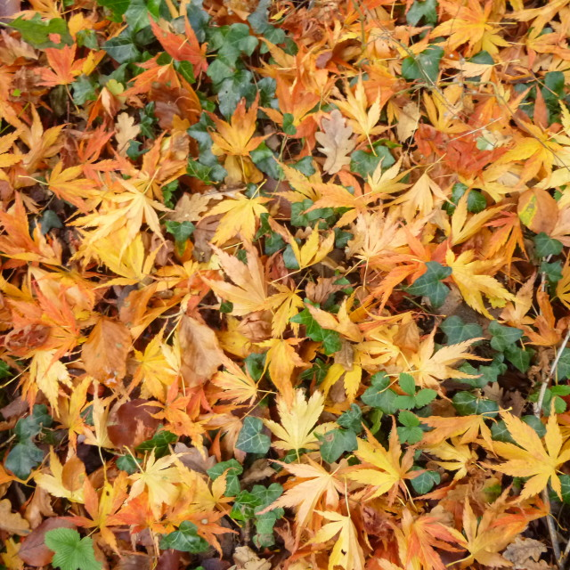 """""""Autumn leaves at Batsford"""" stock image"""
