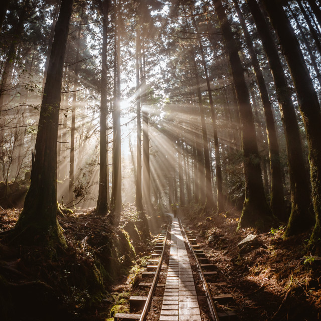 """Forest Sun Rays in Japan"" stock image"