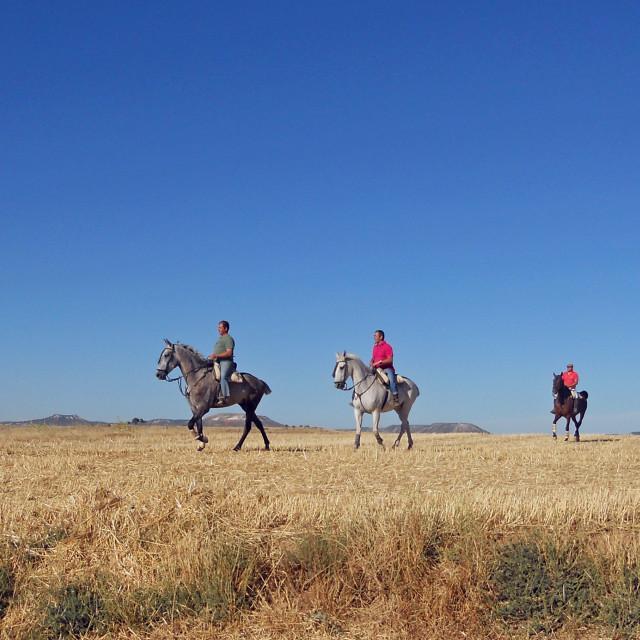 """""""Three horsemen"""" stock image"""