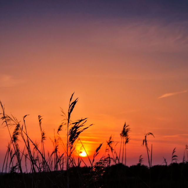 """Marsh Sunset"" stock image"