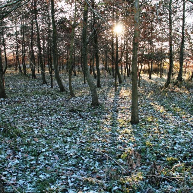 """""""Frosty enchanted wood"""" stock image"""