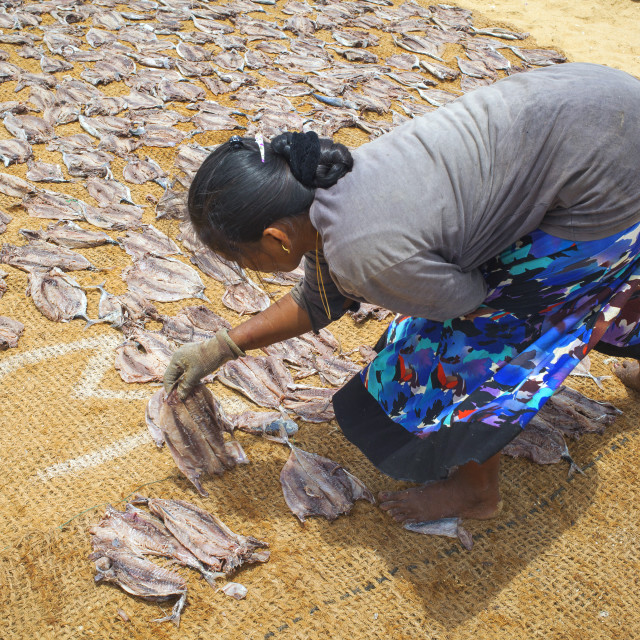 """Lying down fish to dry in Sri Lanka"" stock image"