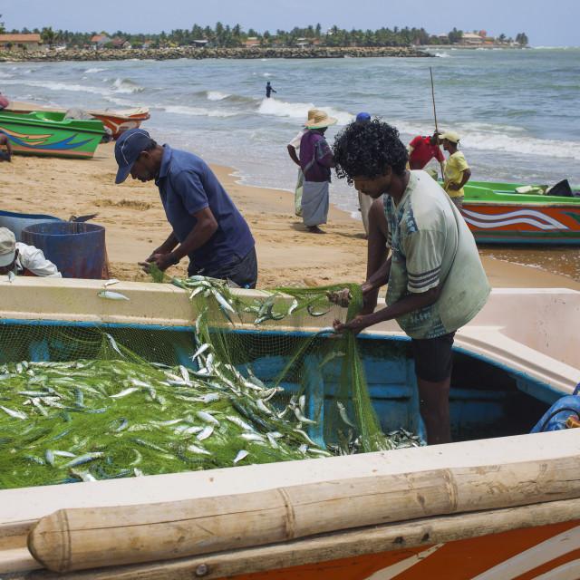 """Fishermen on the beach of Negombo"" stock image"