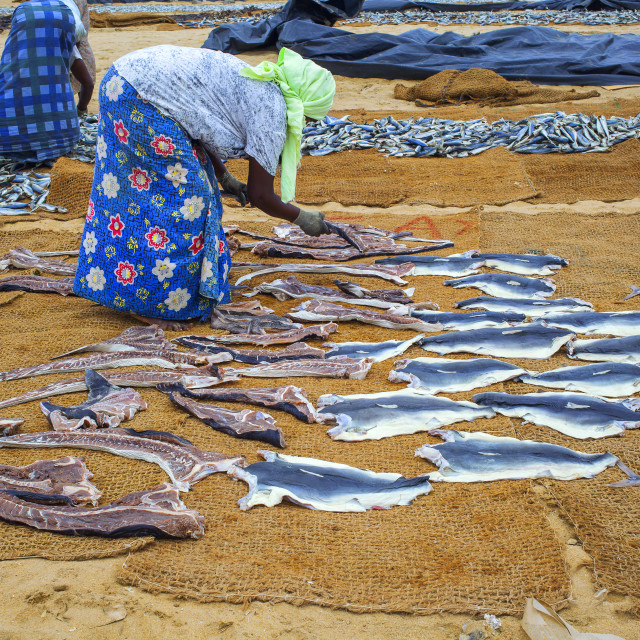 """Women drying fish"" stock image"