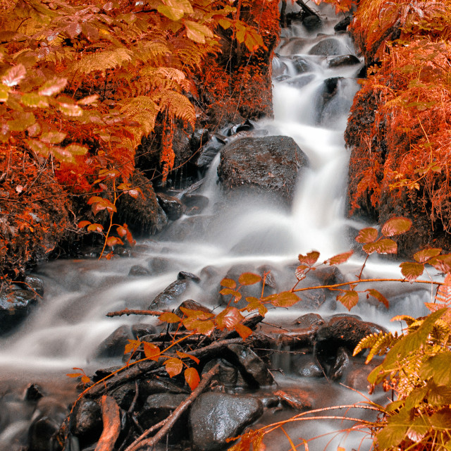 """Autumn Falls"" stock image"