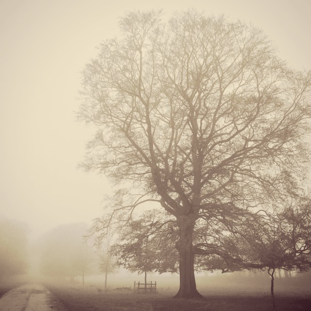 """""""Into the Mist"""" stock image"""