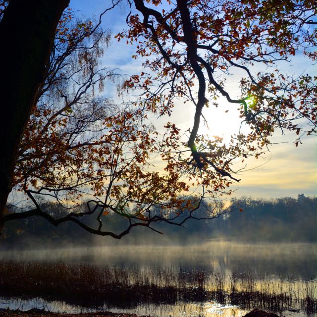 """""""Sunrise at Obelisk Pond"""" stock image"""