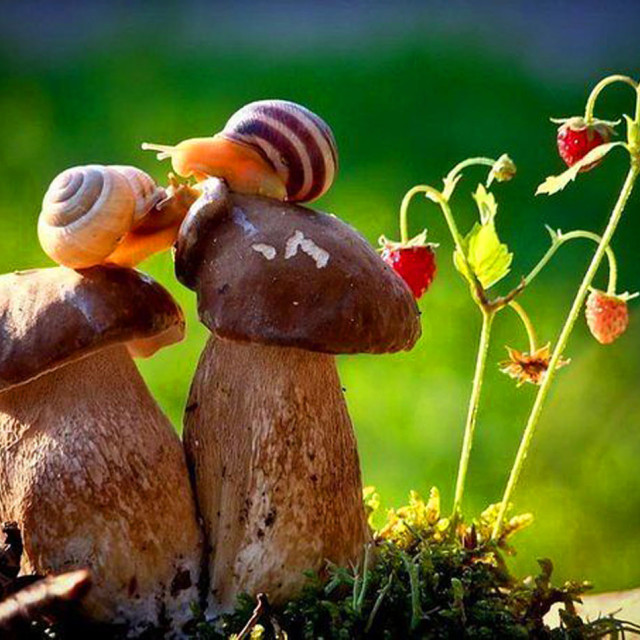 """""""High rise living for Snails!"""" stock image"""