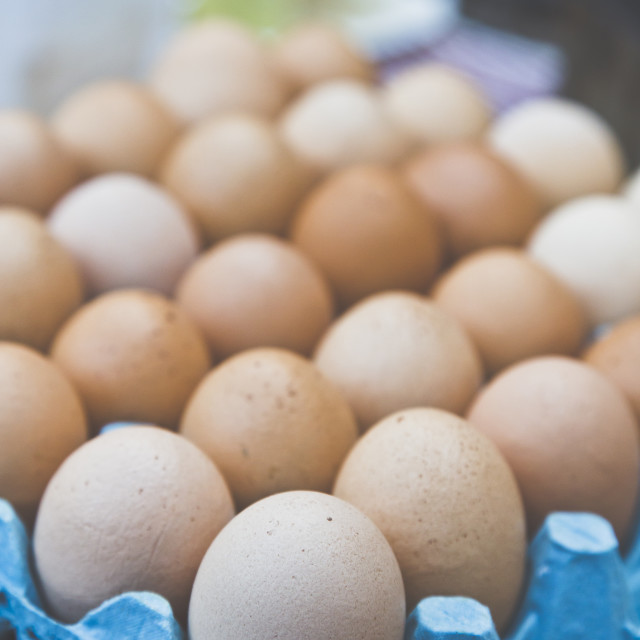 """All Your Eggs"" stock image"