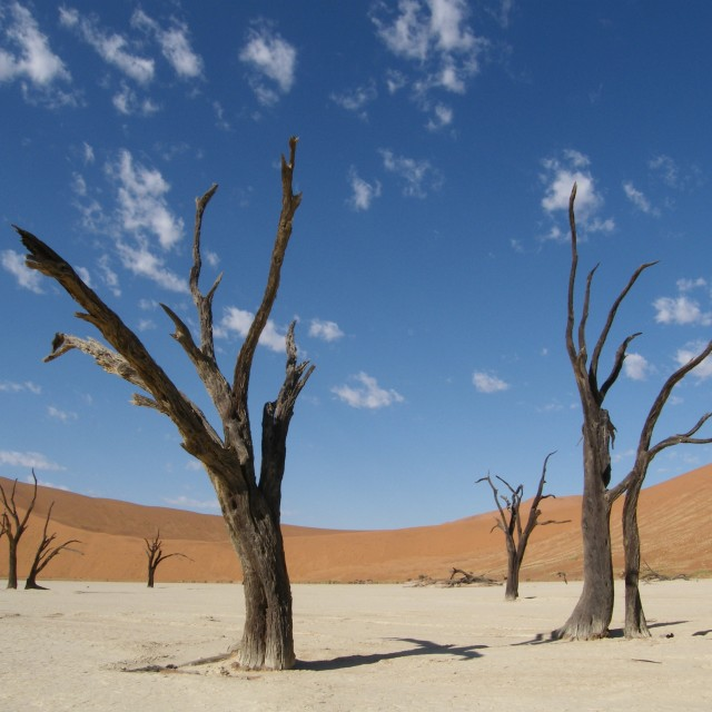 """Deadvlei"" stock image"