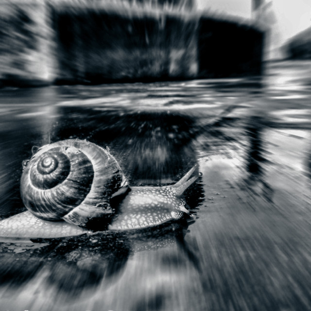 """""""Hurry up! (BW Version)"""" stock image"""