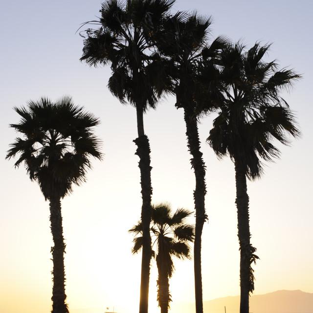 """Sunset at Santa Monica"" stock image"