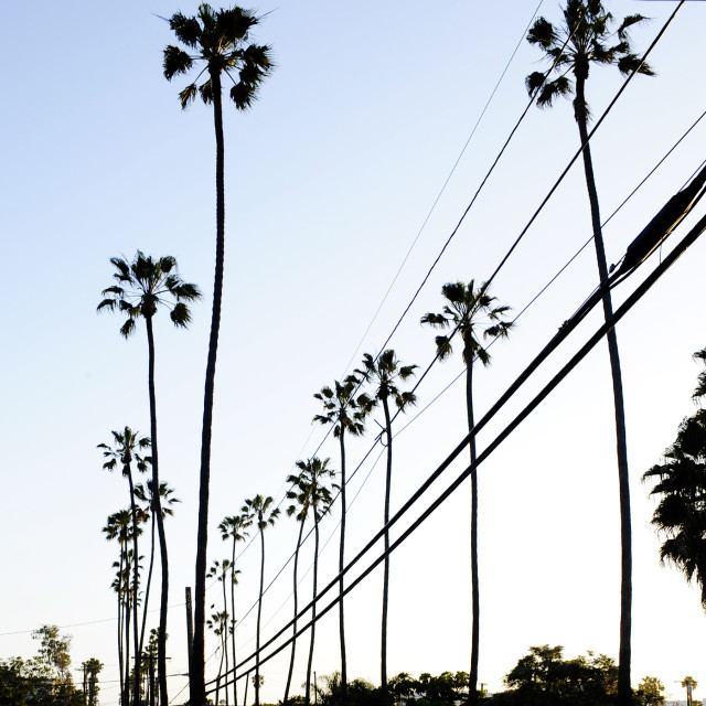 """Palm trees and power lines"" stock image"