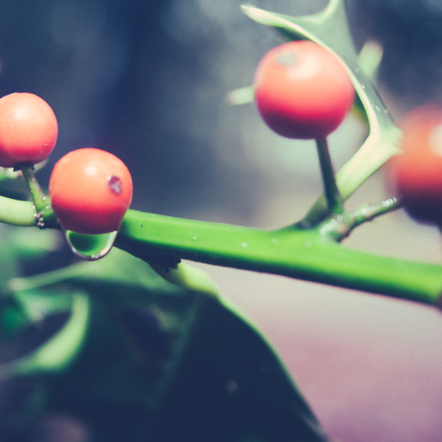 """""""Berry Droplet"""" stock image"""