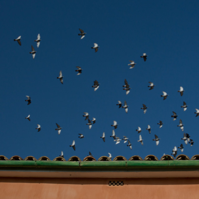 """Speeding birds"" stock image"