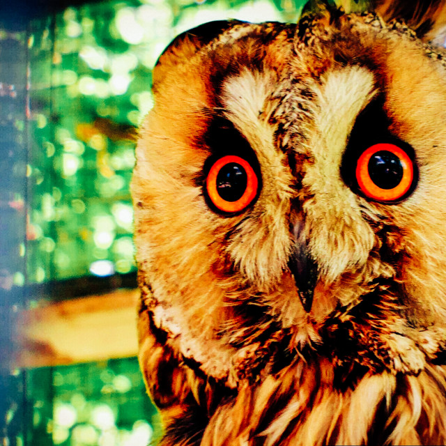 """""""Whoo-Whoo! Who are you?!"""" stock image"""