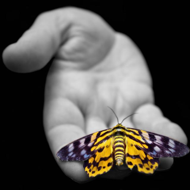 """Moth & Hand"" stock image"