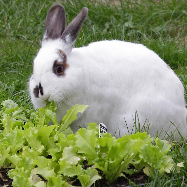 """""""Rabbit food for dinner.....again!"""" stock image"""