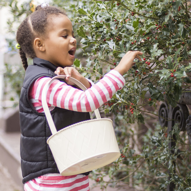 """""""Inspecting The Holly Trees"""" stock image"""