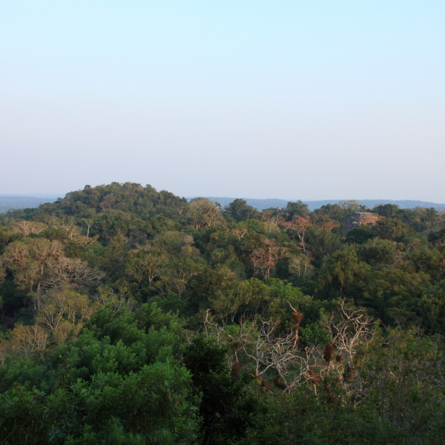 """Tikal National Park, Guatemala"" stock image"