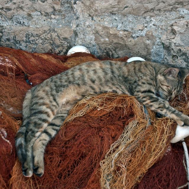 """catnap"" stock image"
