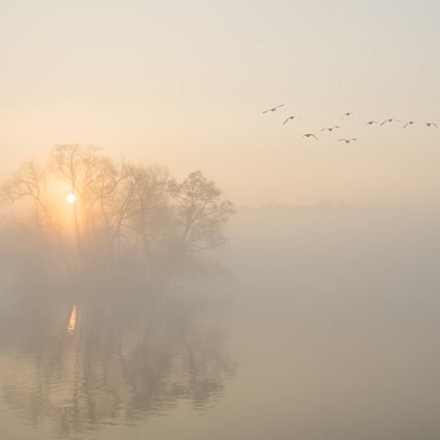 """""""Misty Landscape"""" stock image"""
