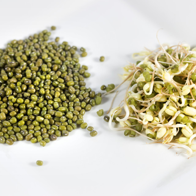 """Mung Beans and Sprouts"" stock image"
