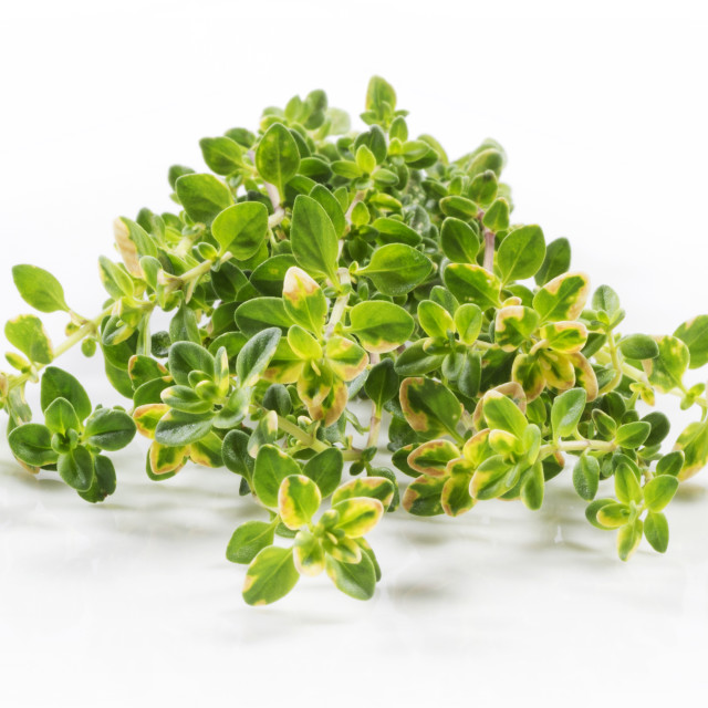 """Lemon Thyme"" stock image"