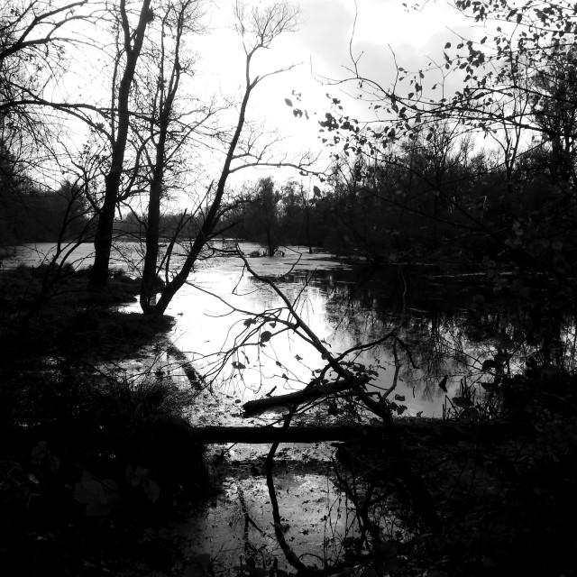 """""""dark river"""" stock image"""