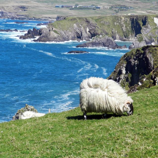 """Dingle bay, Ireland"" stock image"