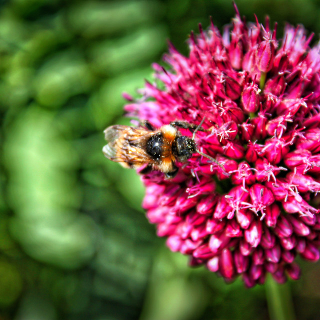 """""""Vibrant flower with a Bee"""" stock image"""