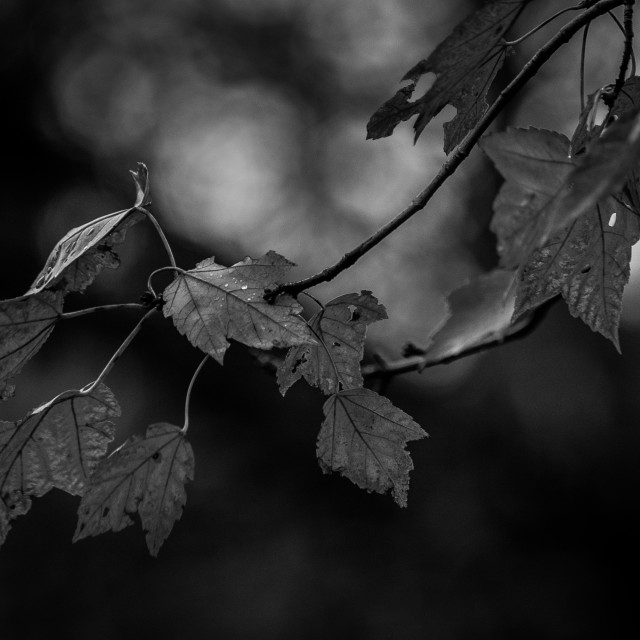 """""""At Autumn's End - B&W"""" stock image"""