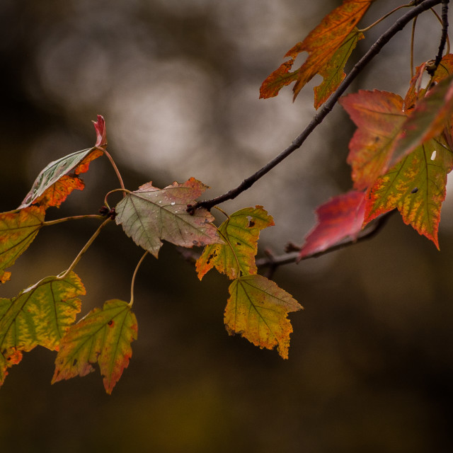 """""""At Autumn's End"""" stock image"""