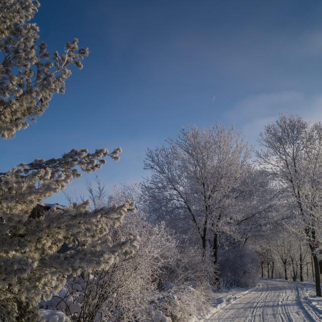 """""""Frozen Paradise"""" stock image"""