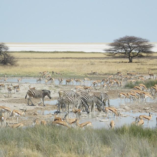"""""""Etosha National Park, Namibia"""" stock image"""