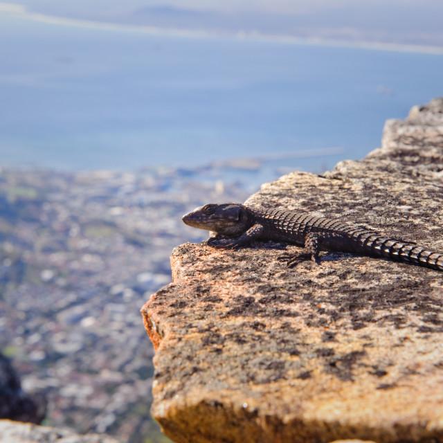 """Gecko"" stock image"