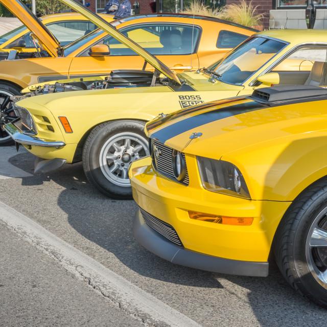 """Mustangs, Mustang Alley"" stock image"