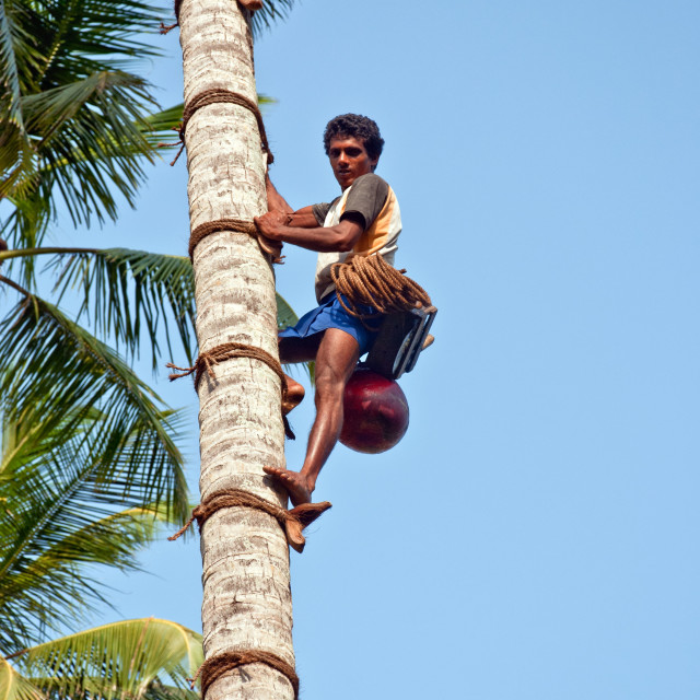 """tree climbing"" stock image"