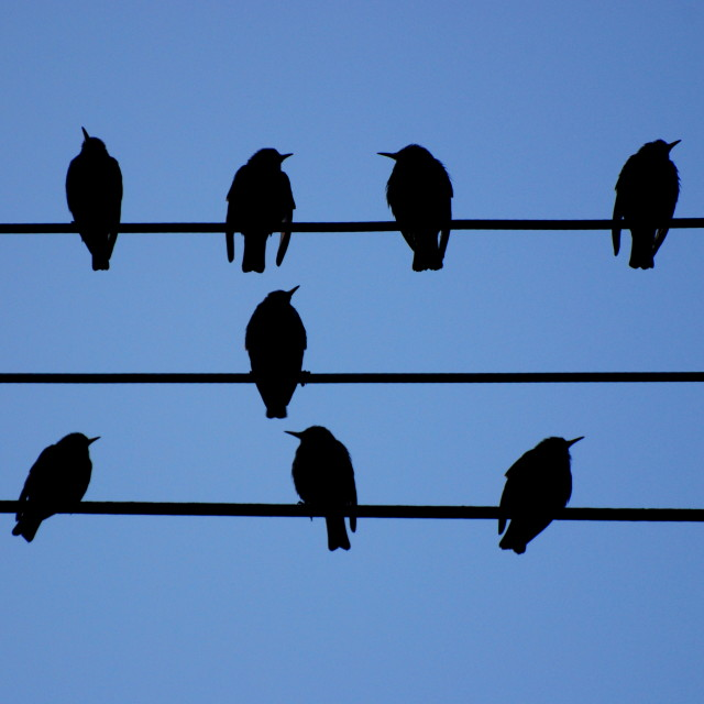 """Song Birds"" stock image"